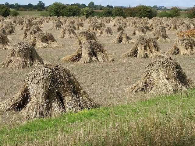 Corn stooks, Marden