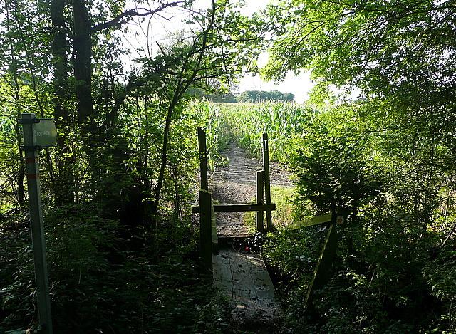 Footpath towards Comp Farm