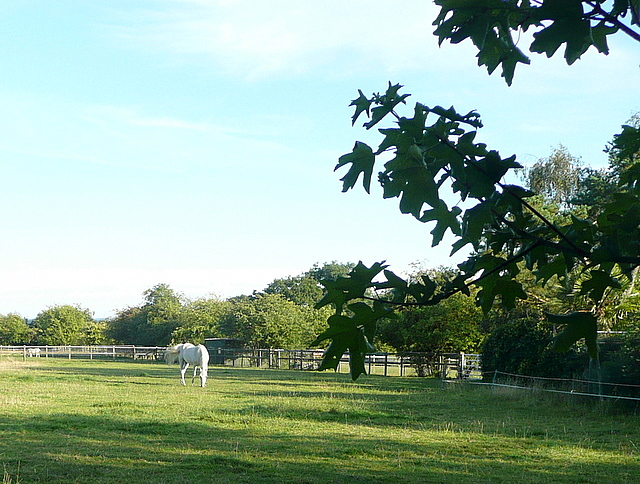 The last paddock in Oxfordshire