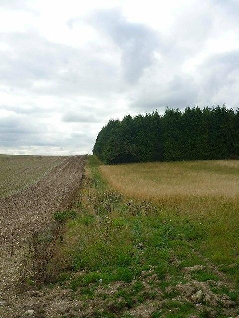 Little Ashridge Wood