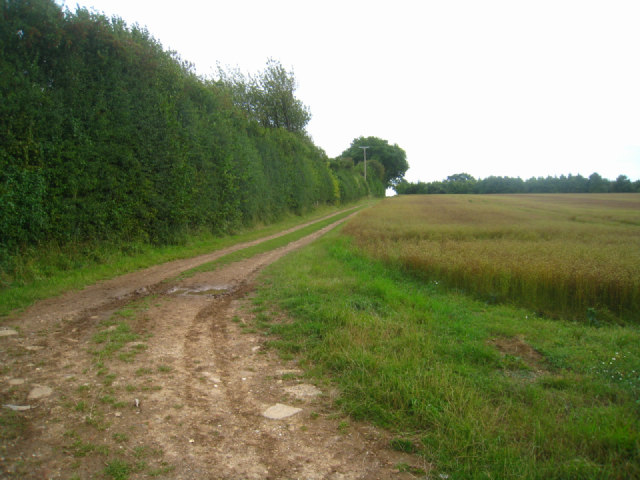 Track by Winter Down Coppice