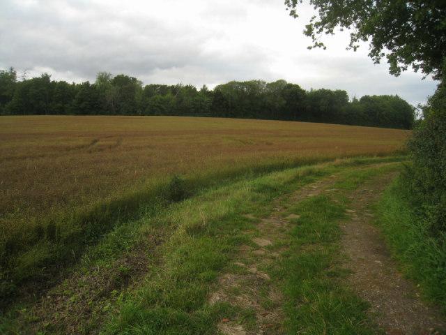 Track to Wych Hazel Copse