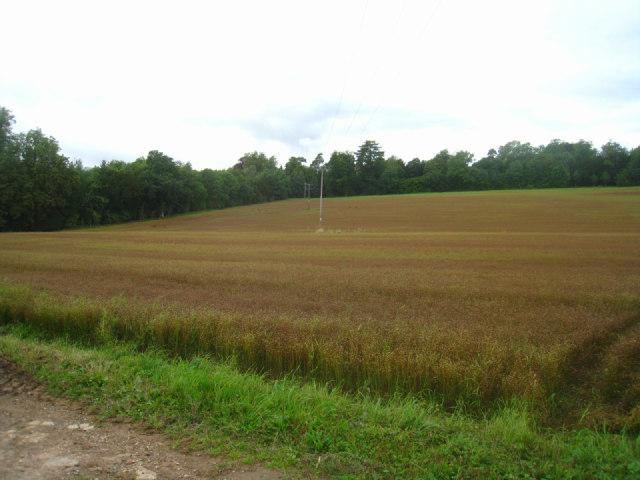 Fields by Little Breach Row