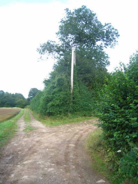 Two farm tracks