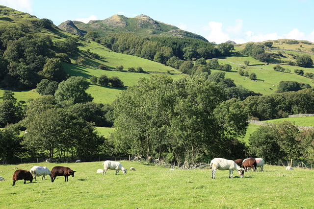 Pasture in the Lickle Valley