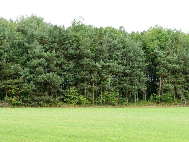 A green landscape?