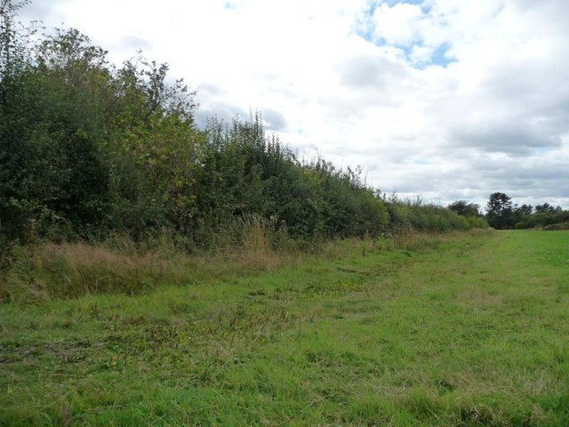 Hedge along southern edge of grassy field