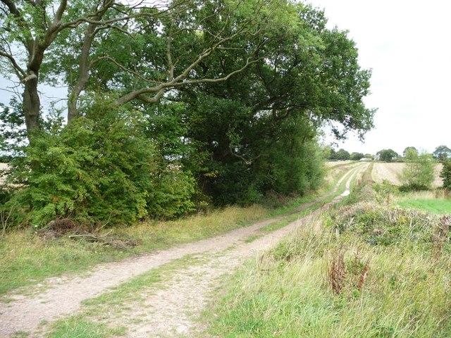 The lane to Honesty Farm