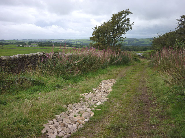 The track above Littledale Road