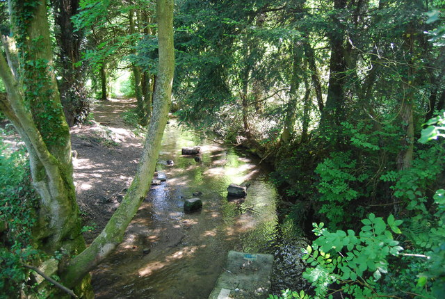 River Bourne in the woods