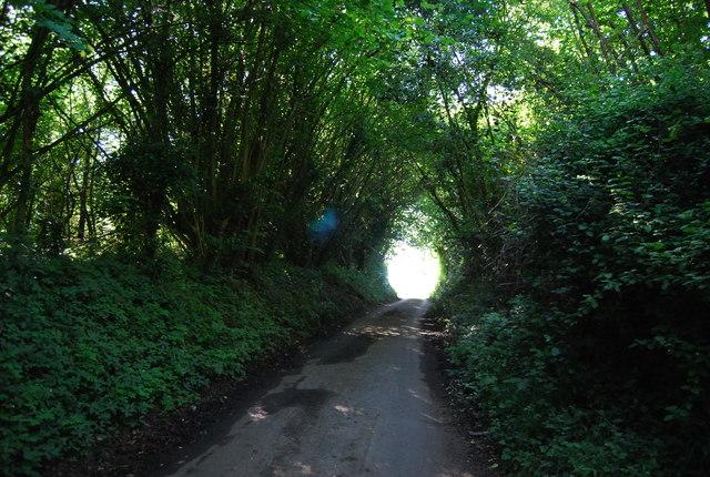 Winfield Lane