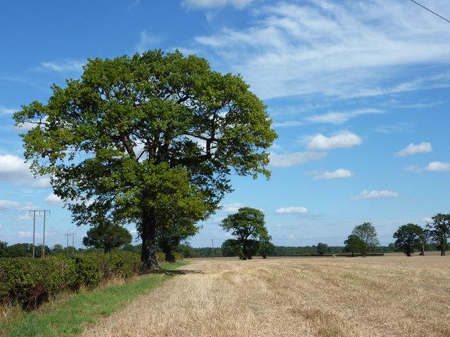 Belt Farmland