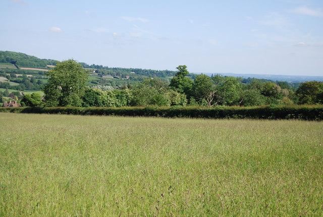 Hedge near Yopps Green