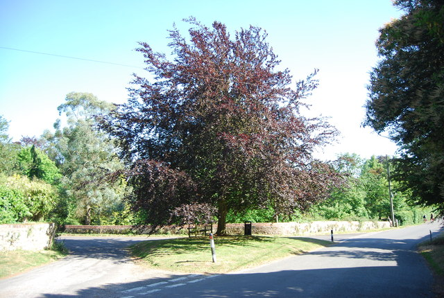 Copper Beech tree, Yopps Green