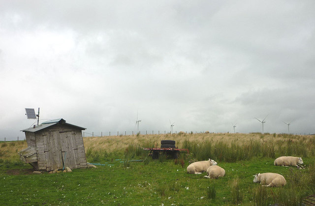 Rams and solar shed near Roeburn Glade