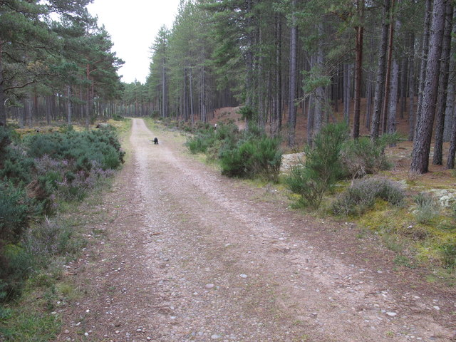 Track in Culbin Forest