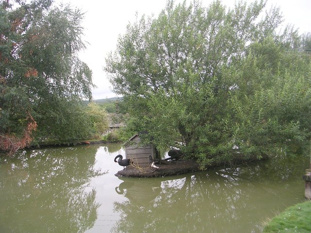 Black Swans - Emsley's Farm Shop, Warm Lane