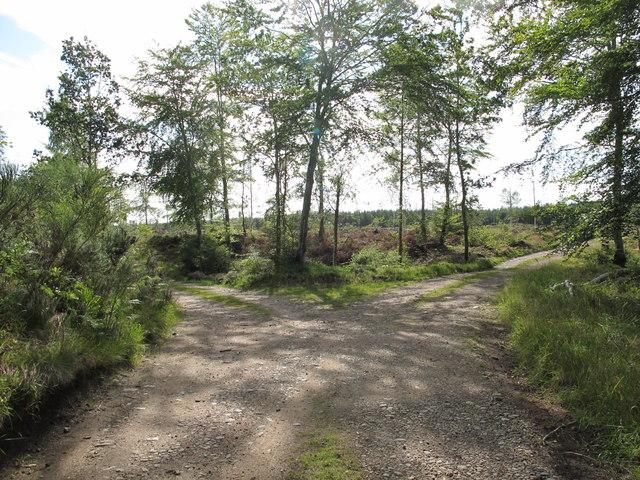 Darnaway Forest