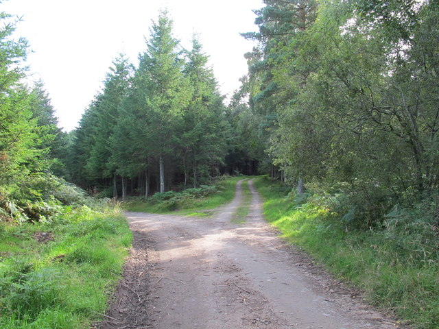 Track Junction in Darnaway Forest
