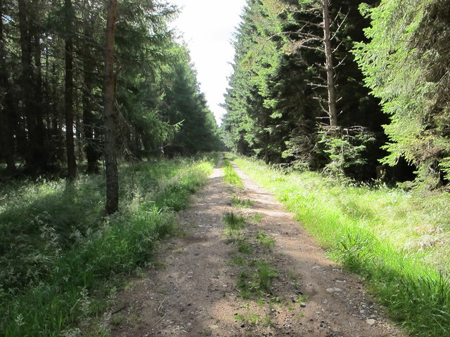 Track in Darnaway Forest