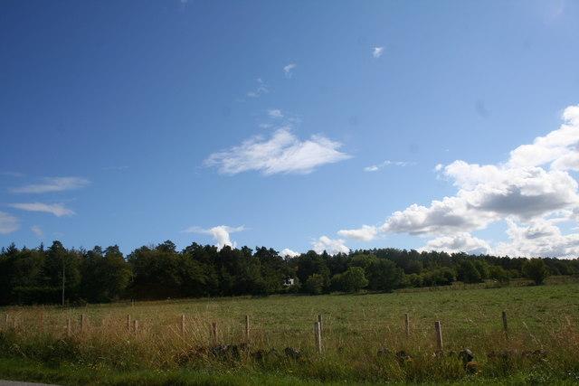 Millegan Woodland