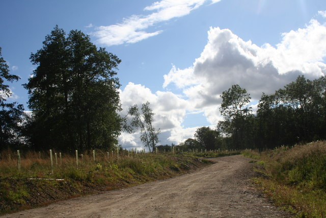 Barlatch Wood
