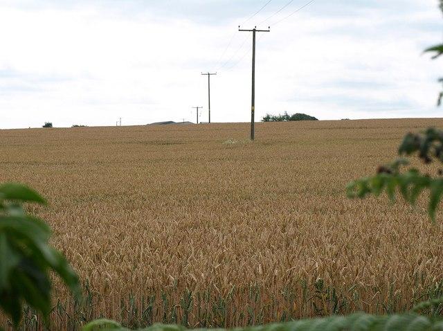 Wheat by Wike Lane