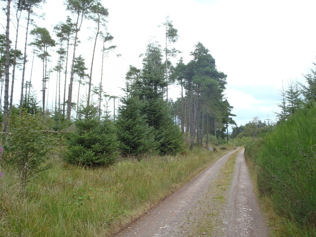 Forest track in the Lowran Glen
