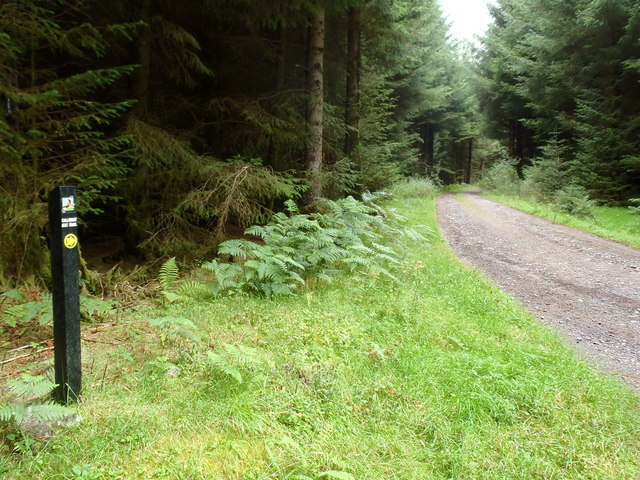 The Red Kite Trail, near Loch Ken
