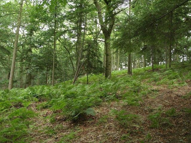 Wike Wood