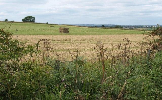 Field near Wike Wood