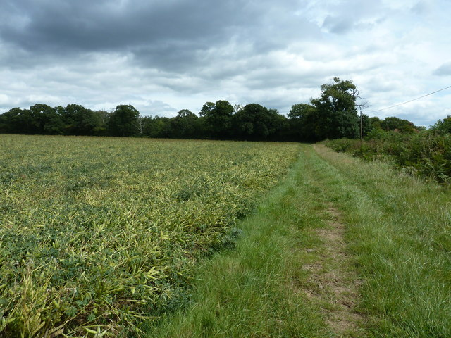 Broadbean field by path to Pound Common Cottages