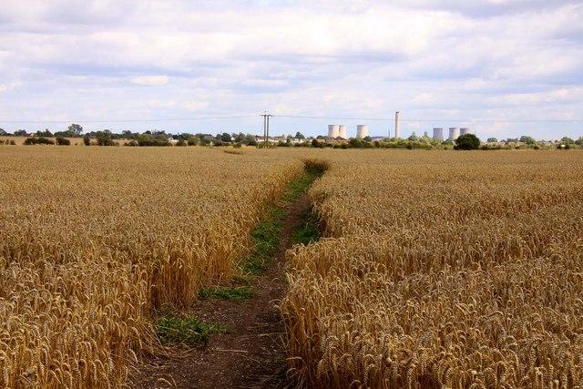 Bridleway through the wheatfield
