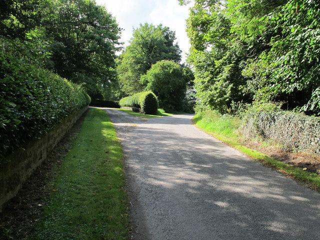 Hedges near Earlsmill