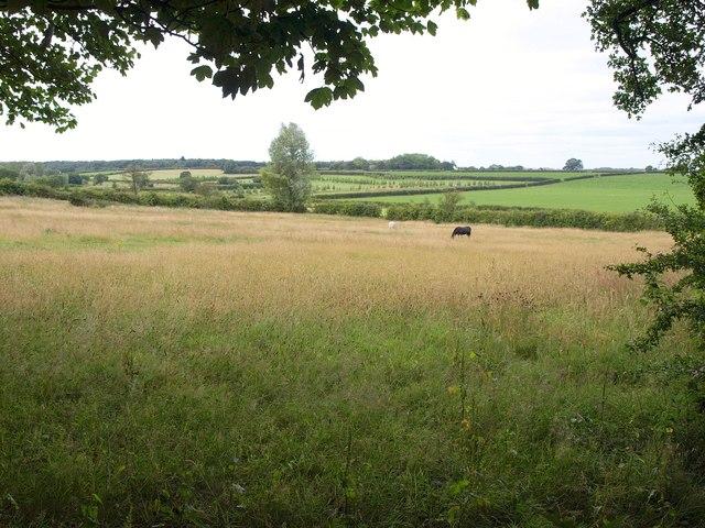 Meadow at Brandon