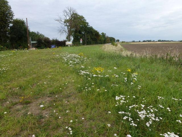 Near Pigeons' Farm, Thorney