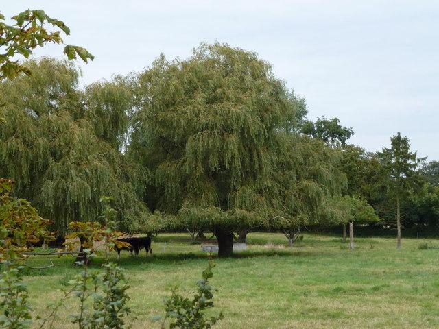 Paddock near Archer's Drove Farm, Thorney