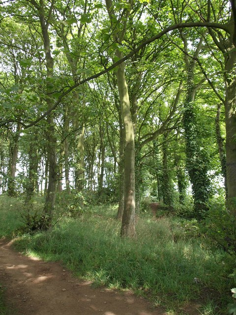 Pits Wood