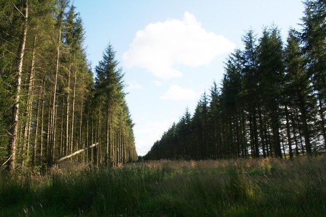 Parallel Tree Belt