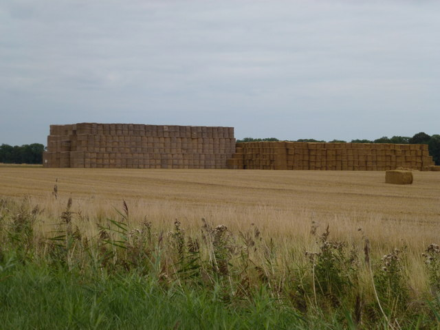 Giant straw stacks near Wallace's Drove, Thorney