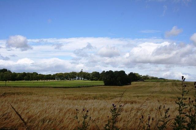 Garioch Barley Field