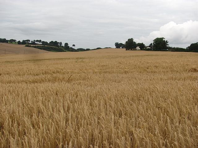 Barley, Bonhard