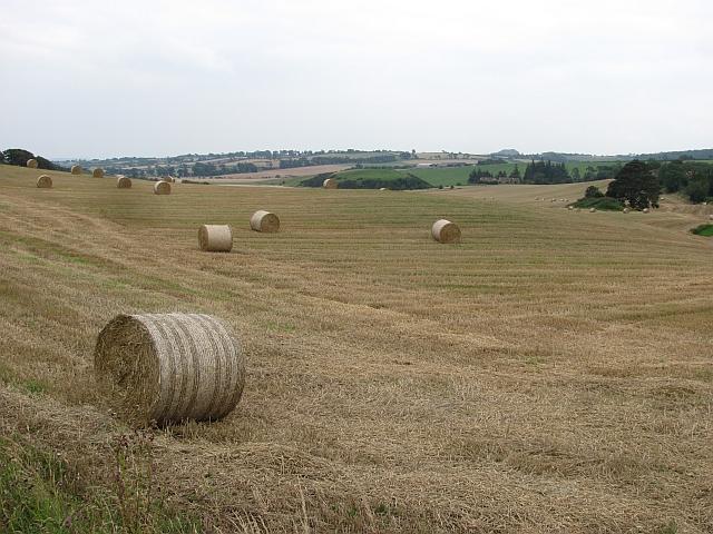 Bales near Parkley Craigs