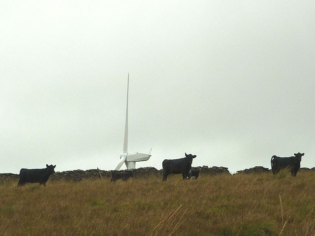 Cows and calves by Roeburndale Road