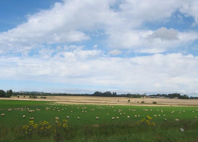 Sheep grazing land at Nunstainton Grange Carrs