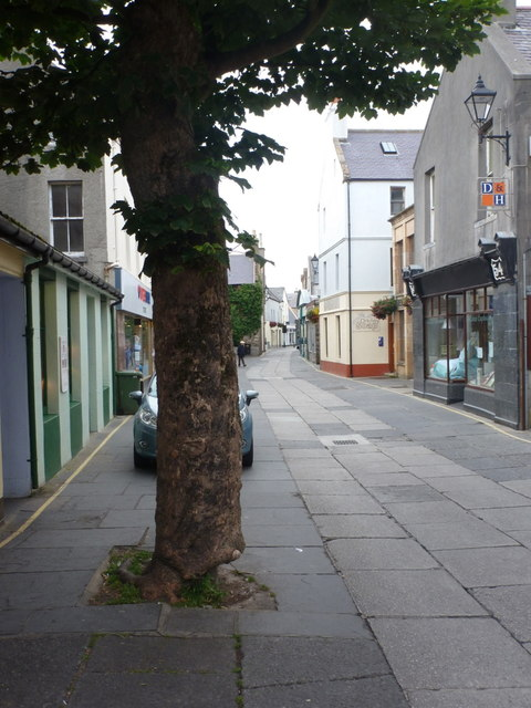 Kirkwall: tree in Albert Street