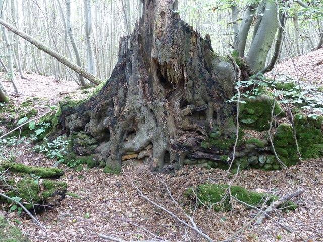 Dead tree by footpath 3329