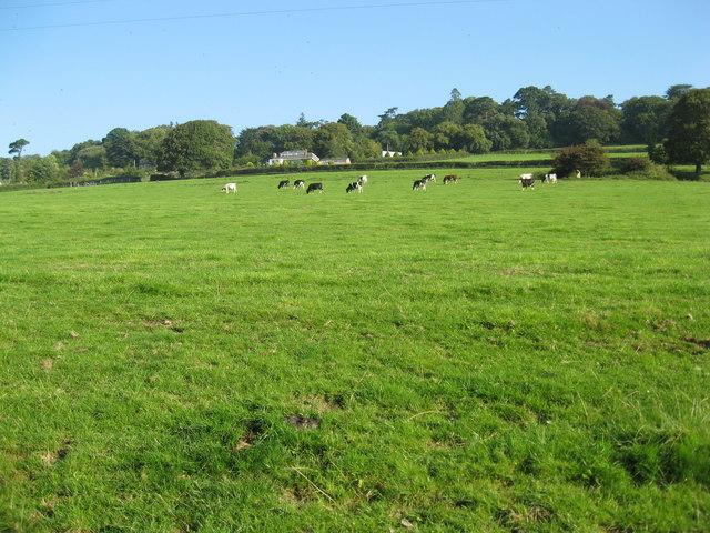 Grazing hillside meadow below Roborough Road