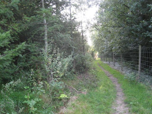 Conifer Plantation