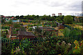 SP0483 : Allotments near Aston Webb Boulevard by Phil Champion